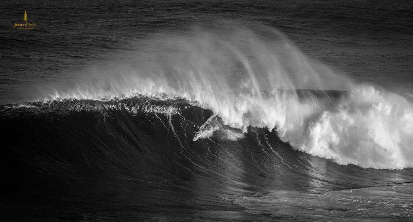 Jaws_2014_15web