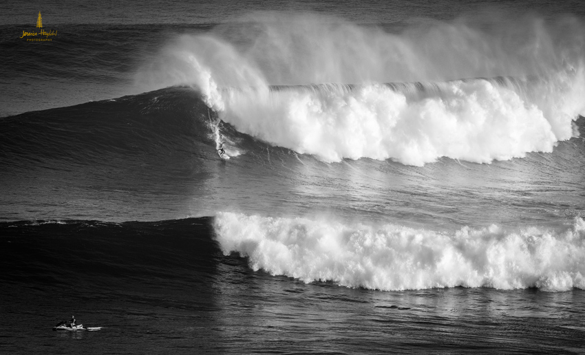 Jaws_2014_17web