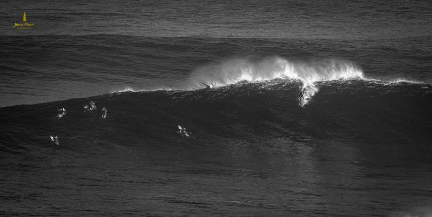 Jaws_2014_32web