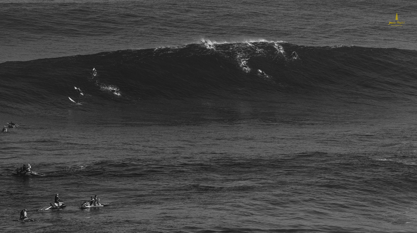 Jaws_2014_33web