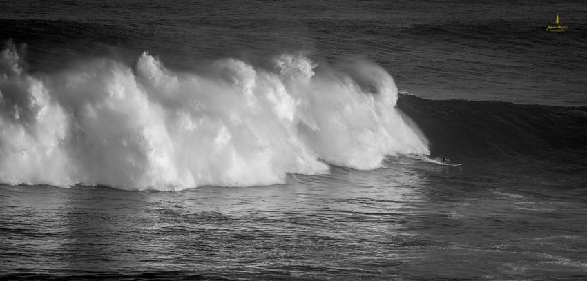 Jaws_2014_34web