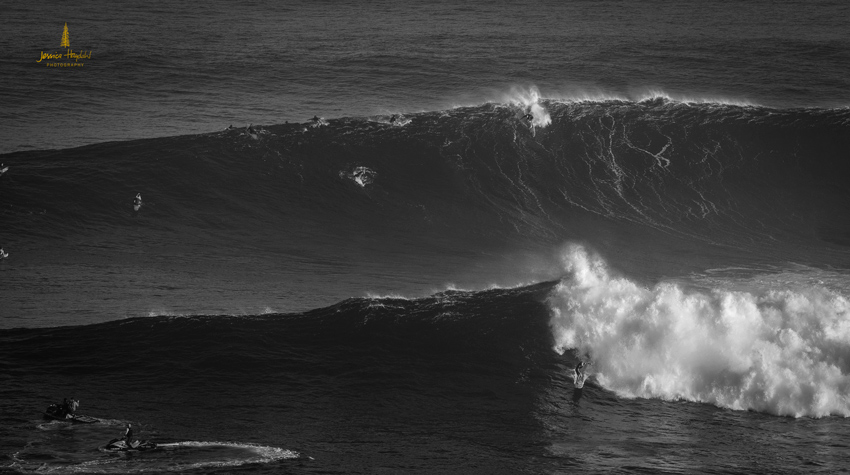 Jaws_2014_7web
