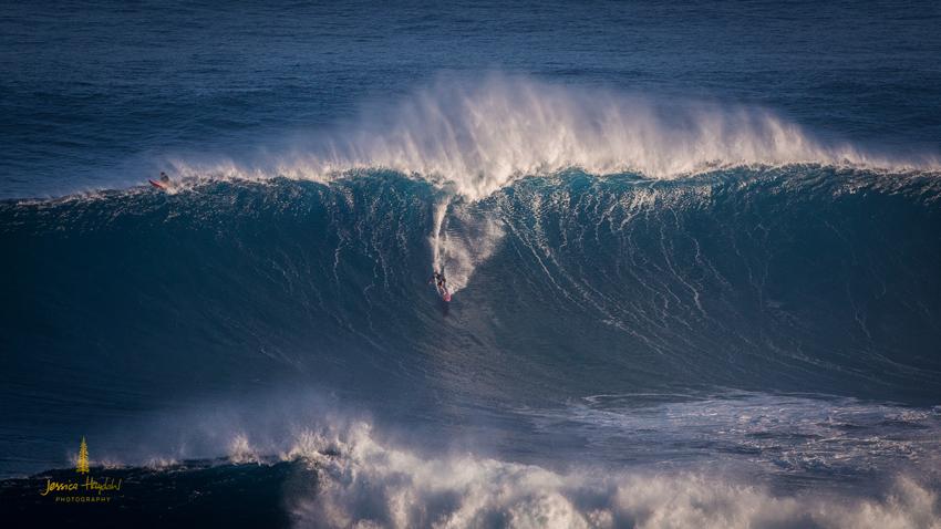 Jaws_2014_8web