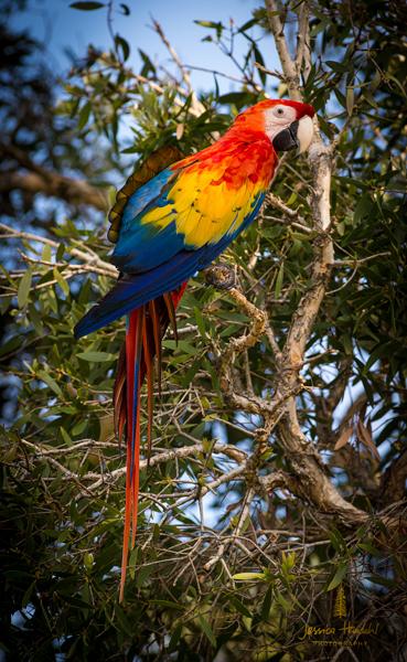 parrot_2014_1web