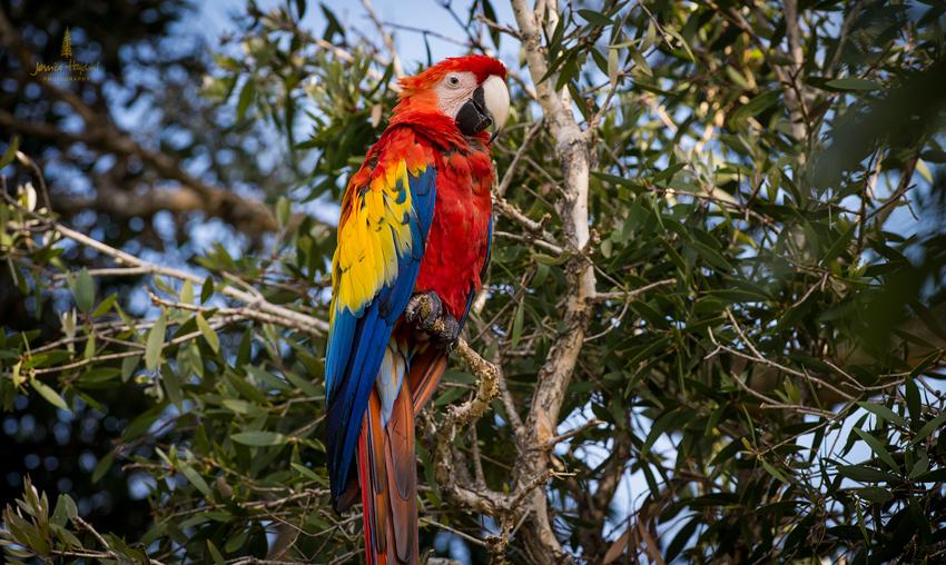 parrot_2014_2web