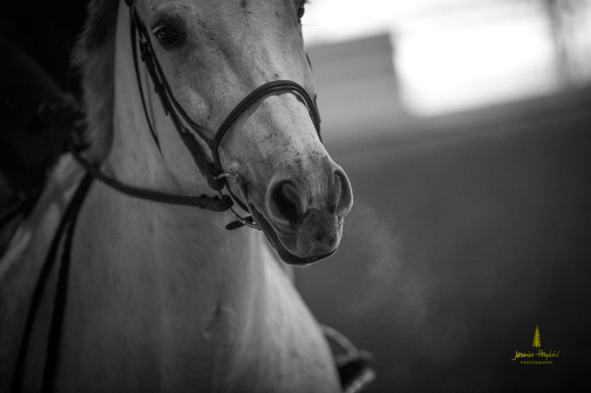 horse_jumping_2015_1web