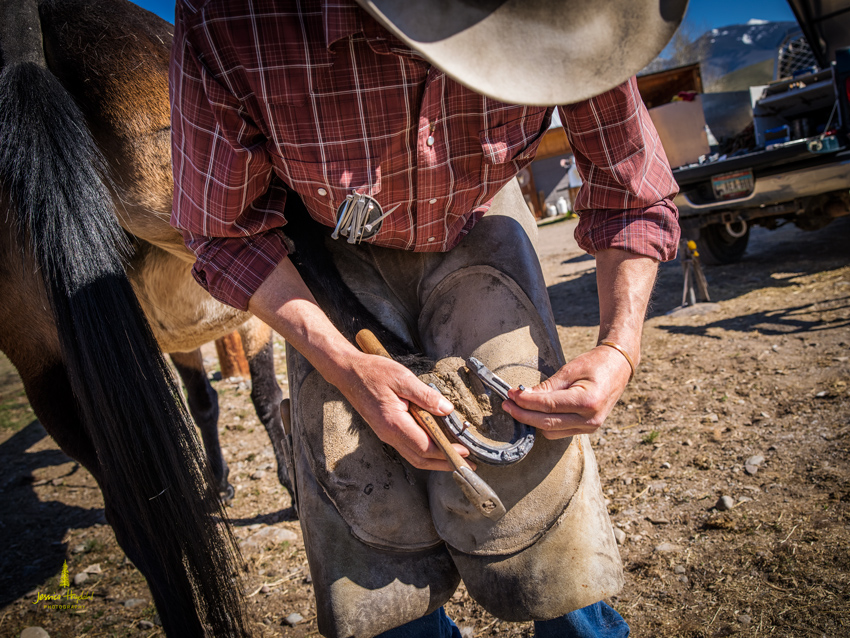 salmon_idaho_shoeing_2015_23web