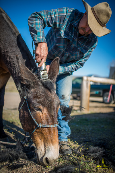 salmon_idaho_shoeing_2015_51web