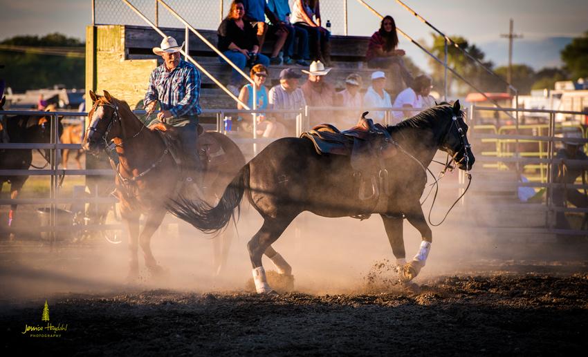 senior_pro_rodeo_2015_8web