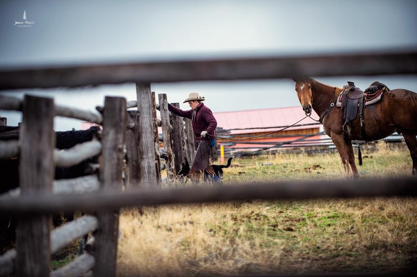 barDNorth_cattle_drive_2015_11web