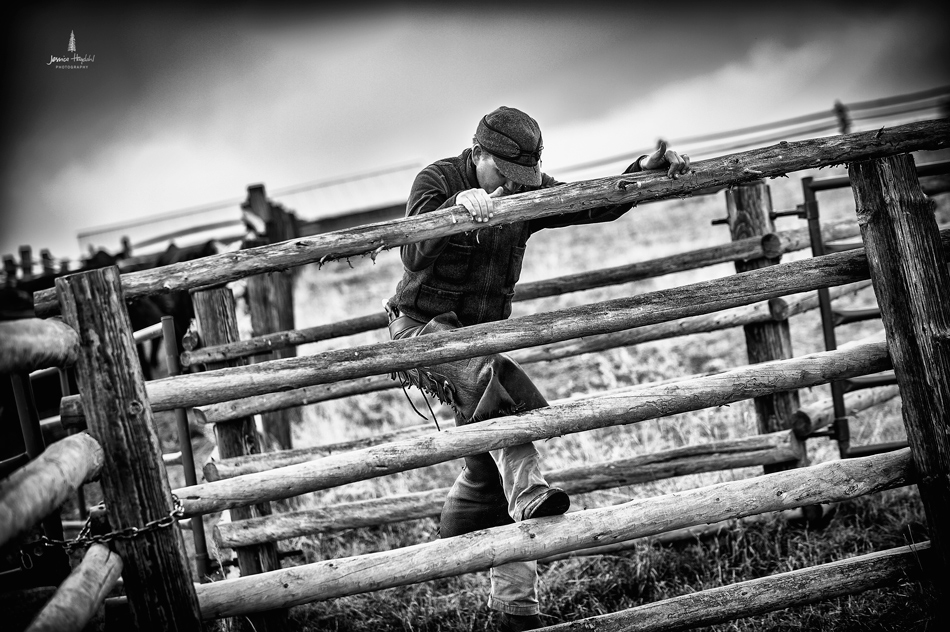 barDNorth_cattle_drive_2015_16web