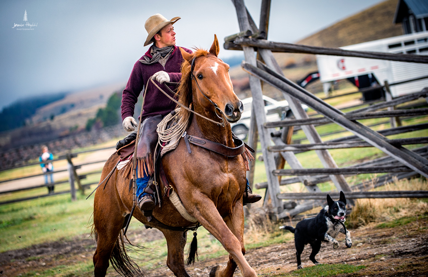 barDNorth_cattle_drive_2015_1web