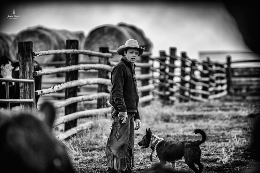 barDNorth_cattle_drive_2015_23web