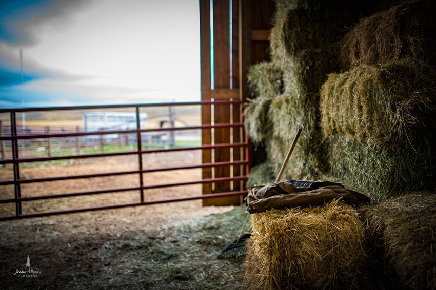 barDNorth_cattle_drive_2015_24web