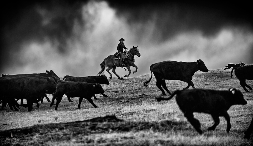 barDNorth_cattle_drive_2015_27web
