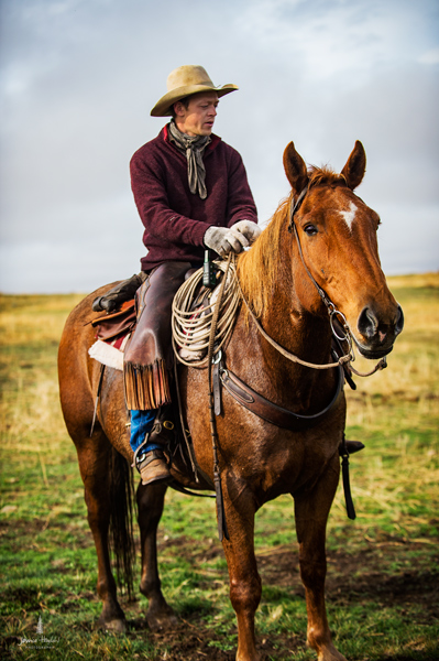 barDNorth_cattle_drive_2015_28web
