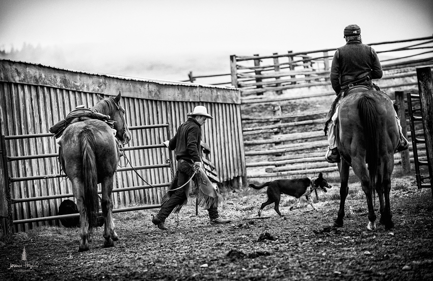 barDNorth_cattle_drive_2015_29web