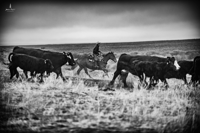 barDNorth_cattle_drive_2015_2web