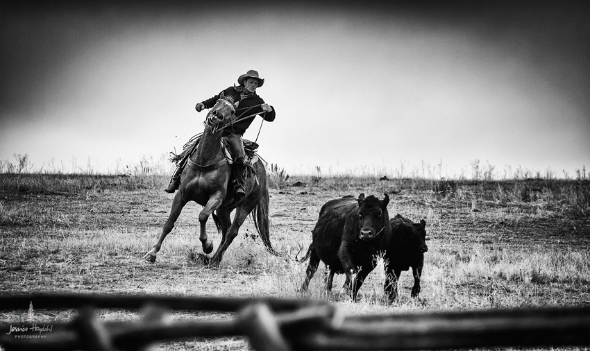 barDNorth_cattle_drive_2015_30web