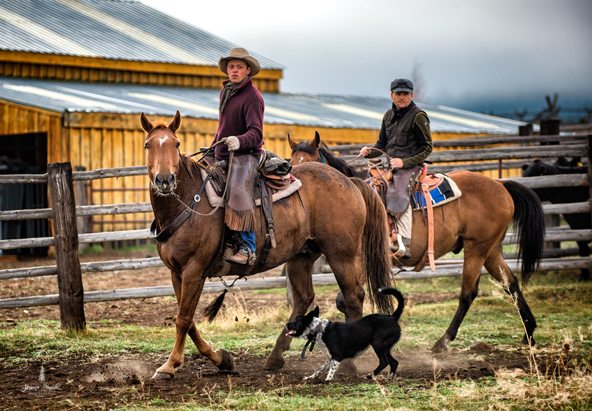 barDNorth_cattle_drive_2015_5web