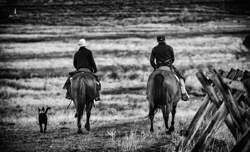 barDNorth_cattle_drive_2015_6web