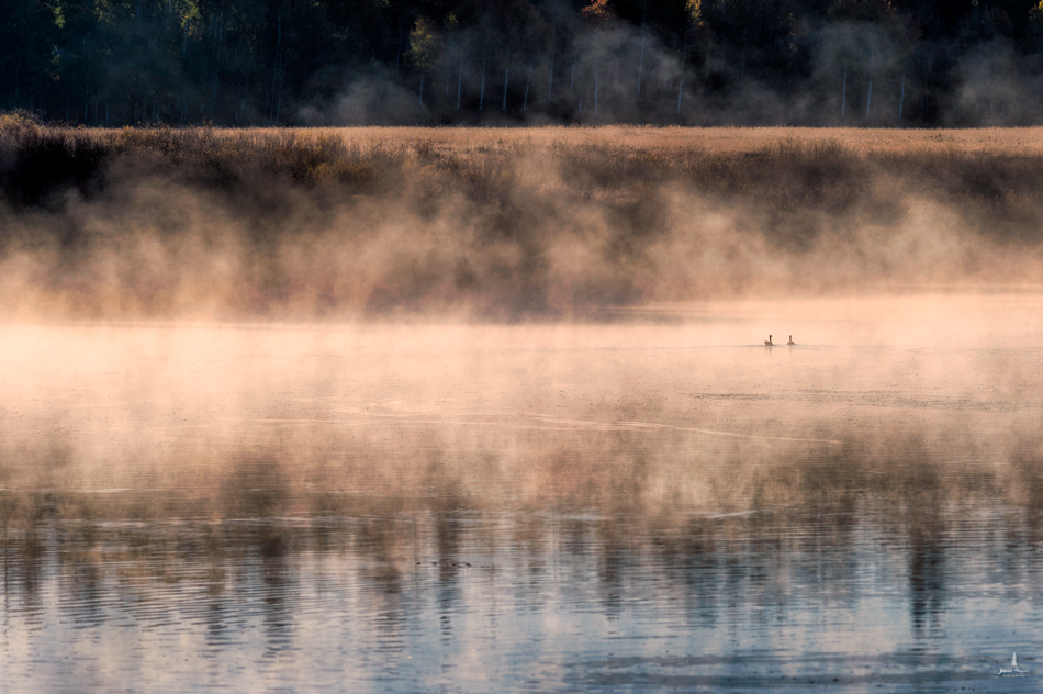 oxbow_bend_mist_6web