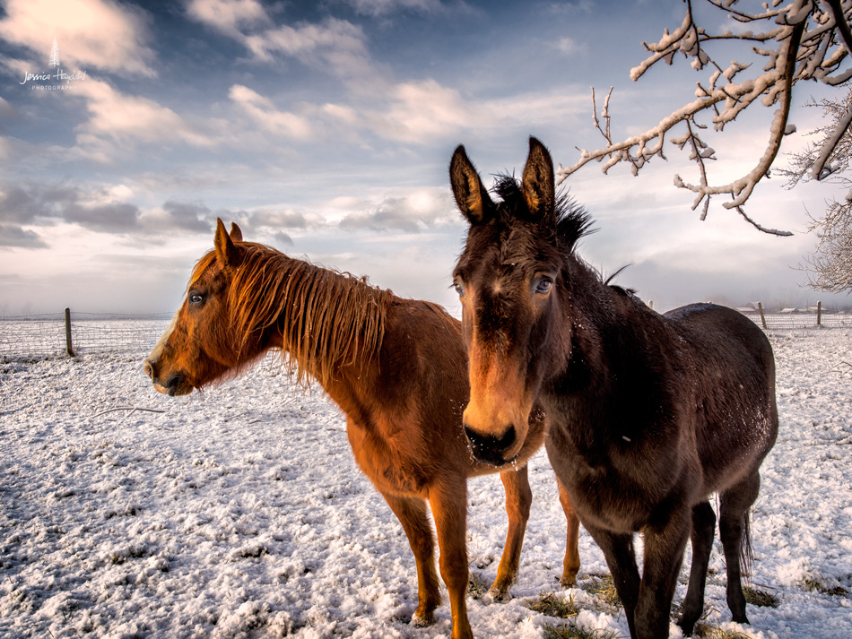 5Horses_pano_march_25th_2016_5web
