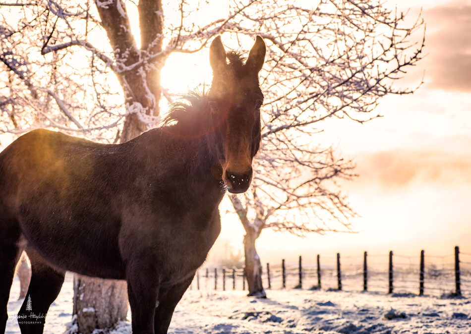 Horses_pano_march_25th_2016_10web