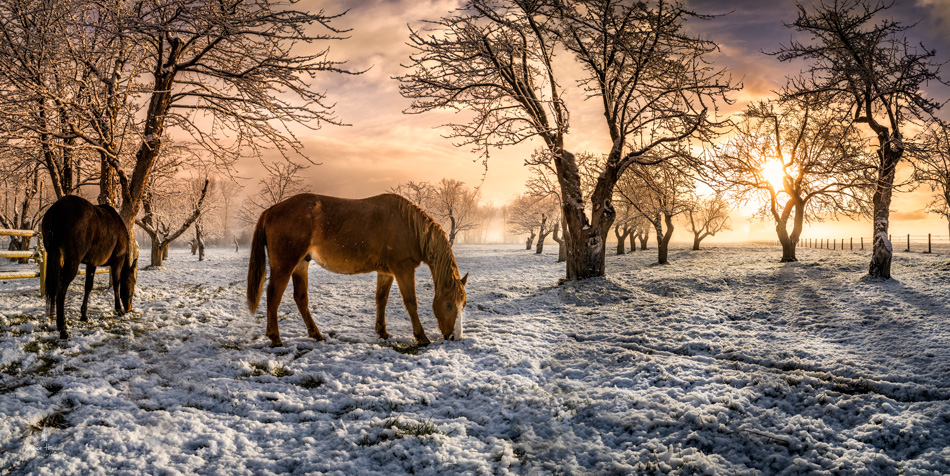 Horses_pano_march_25th_2016_1web
