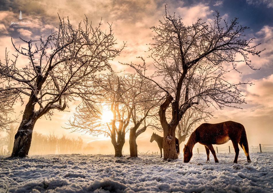 Horses_pano_march_25th_2016_2web
