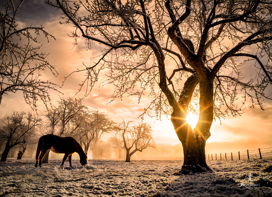 Horses_pano_march_25th_2016_3web