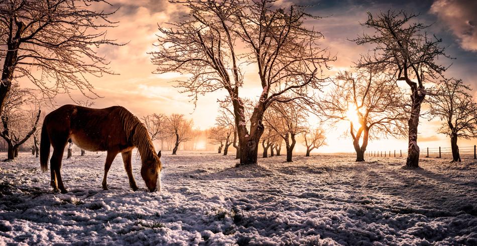 Horses_pano_march_25th_2016_4_desaturatedweb