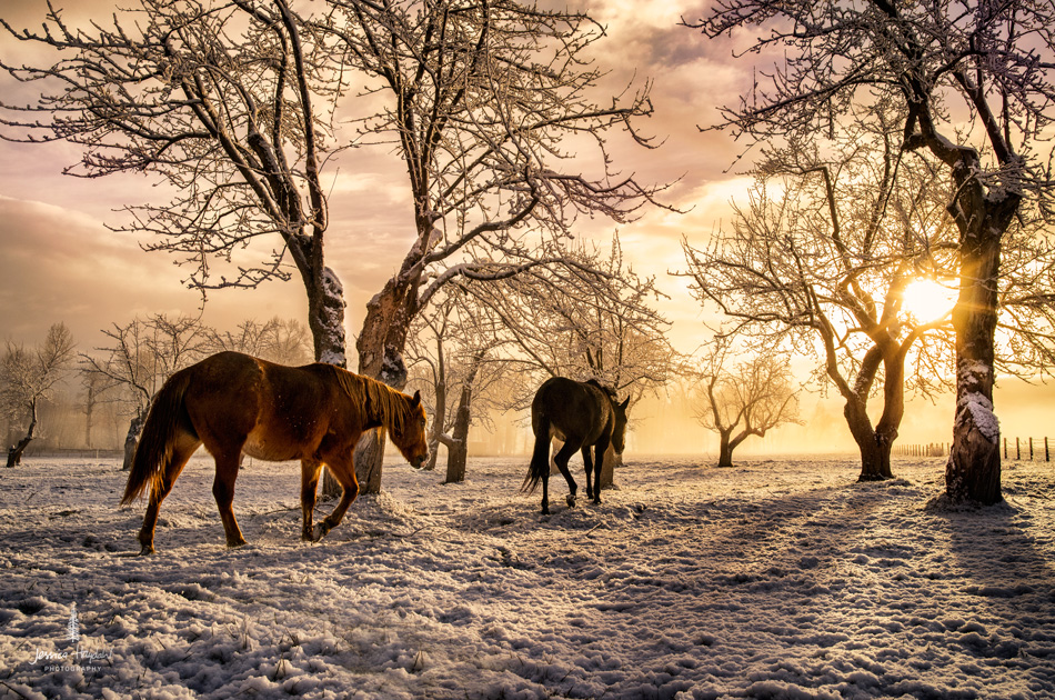 Horses_pano_march_25th_2016_8web