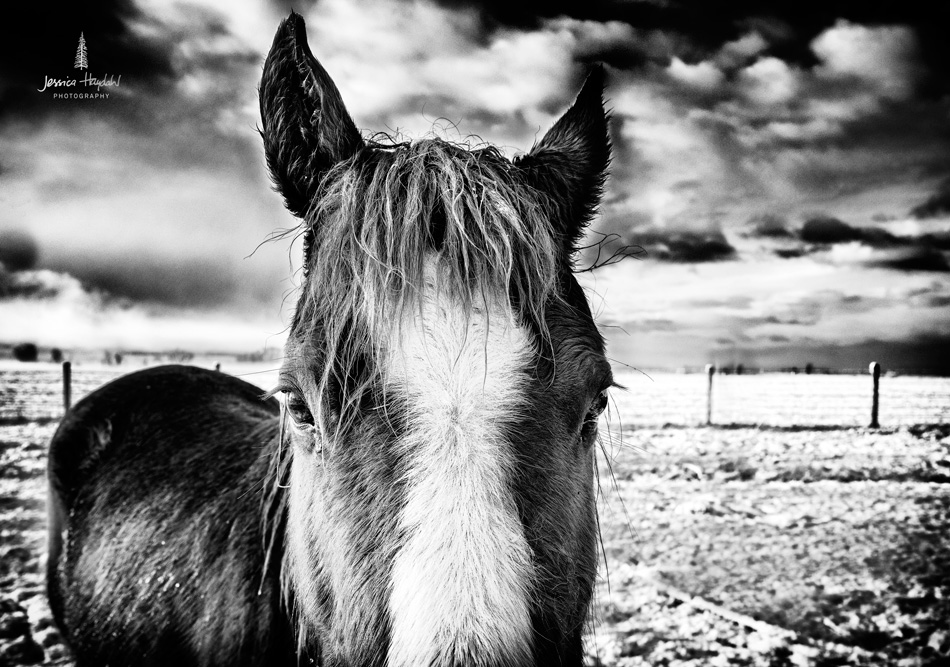 Horses_pano_march_25th_2016_9web