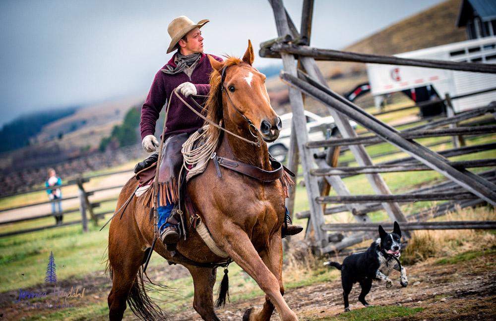 barDNorth_cattle_drive_2015_1