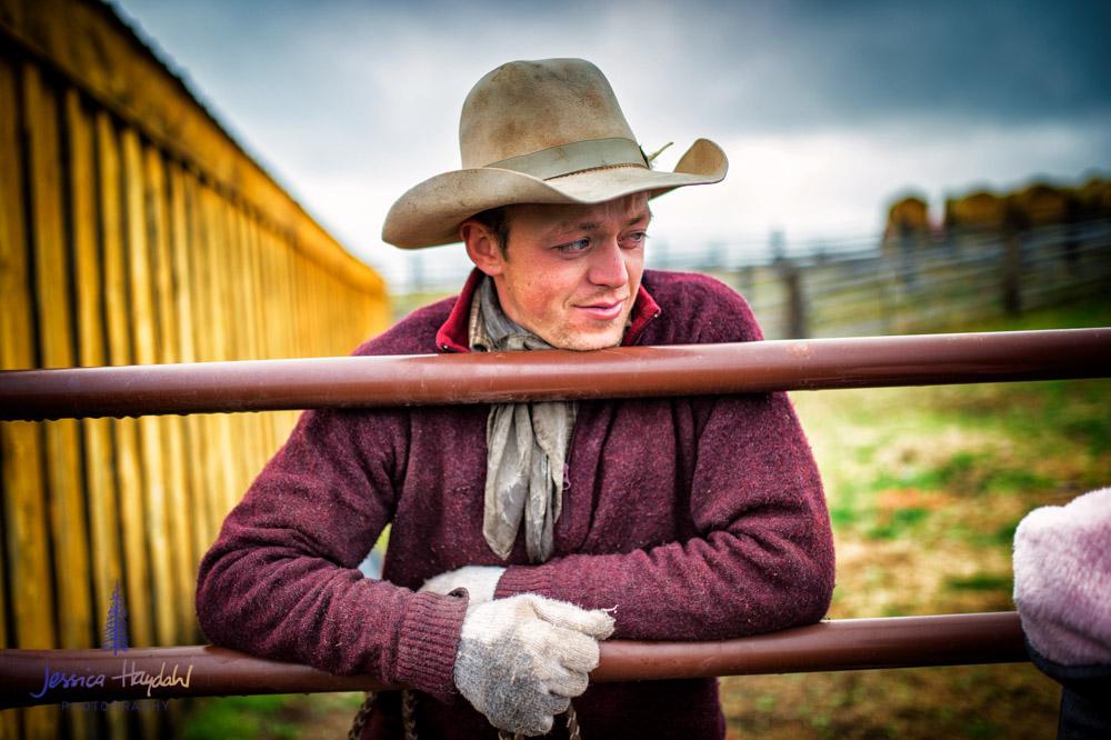 barDNorth_cattle_drive_2015_15