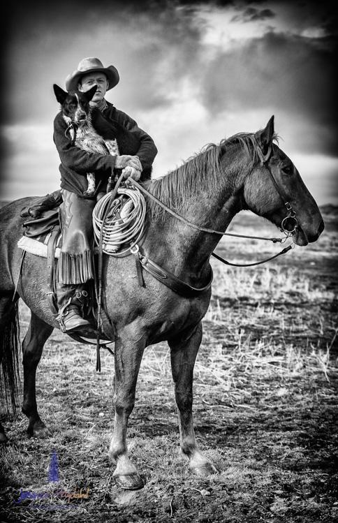 barDNorth_cattle_drive_2015_18