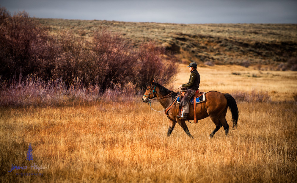 barDNorth_cattle_drive_2015_20
