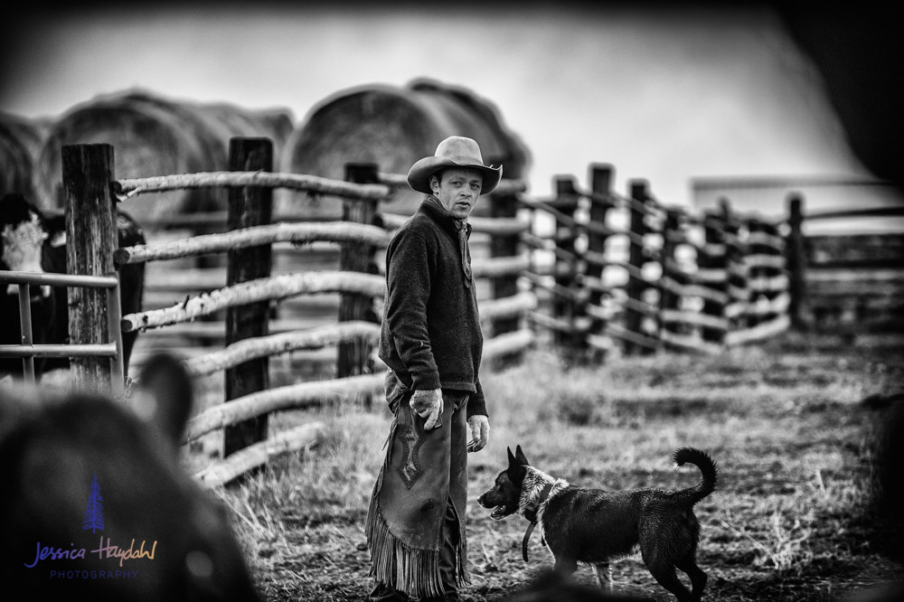 barDNorth_cattle_drive_2015_23