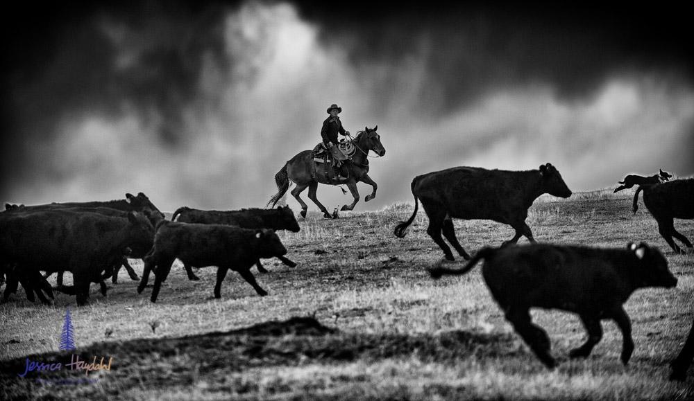 barDNorth_cattle_drive_2015_27