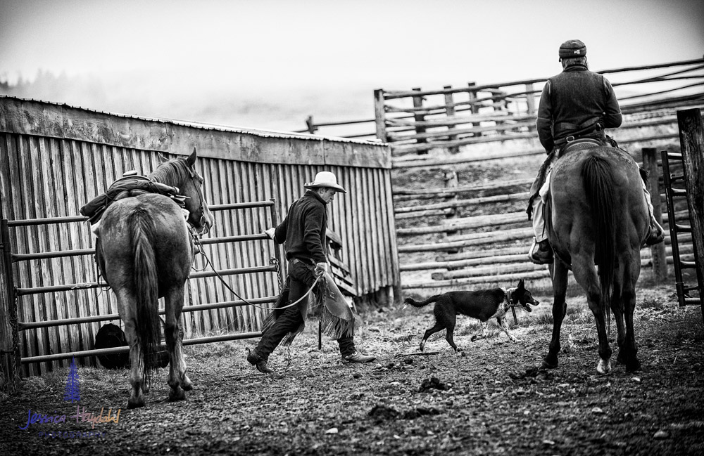 barDNorth_cattle_drive_2015_29