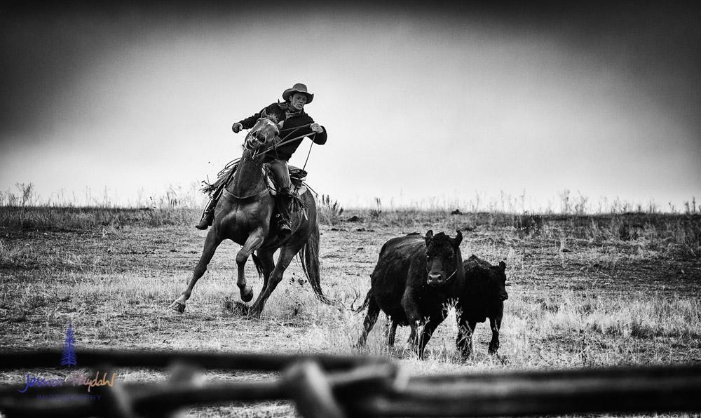 barDNorth_cattle_drive_2015_30
