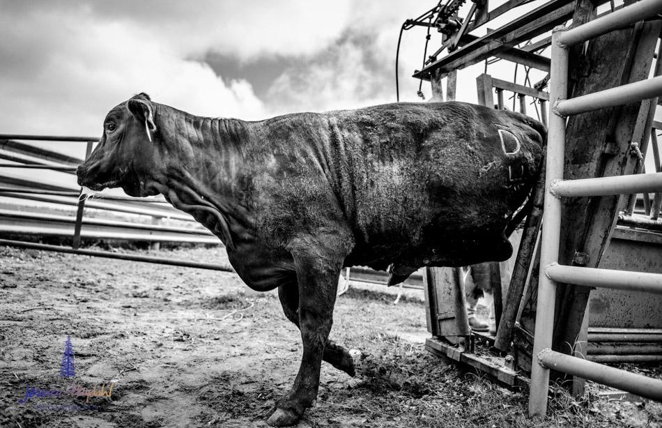 ranch_life_10