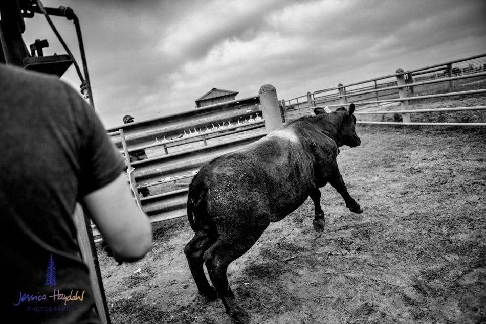 ranch_life_19