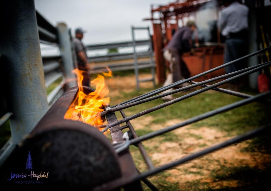 ranch_life_37