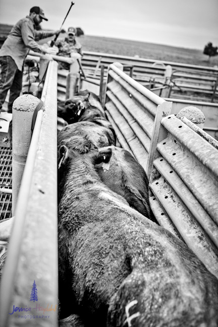 ranch_life_44