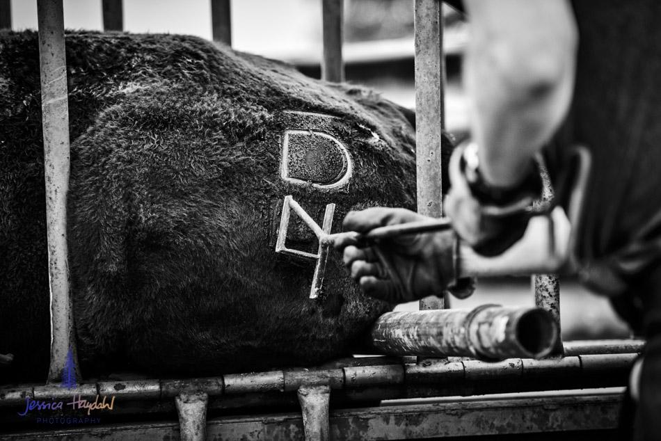 ranch_life_65