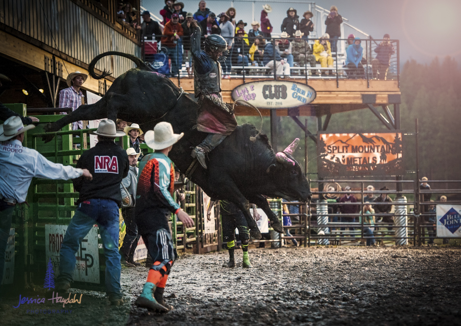 Bullarama_Richardson_2016_web-10