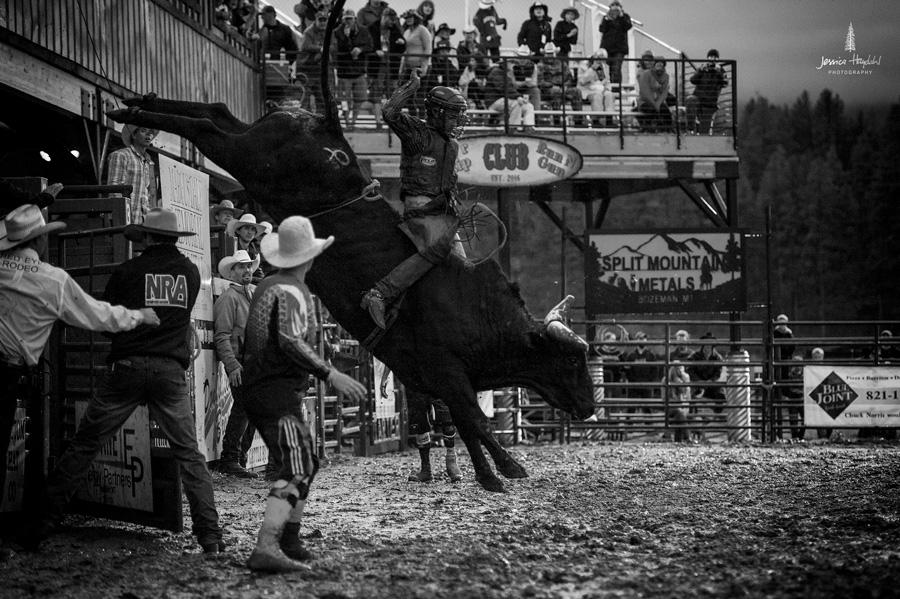 darby_rodeo_2016_1webweb