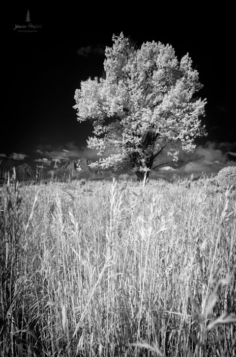 teton_infrared_2016_3web.jpg